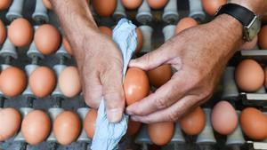 Un operario limpia un huevo en una granja suiza.