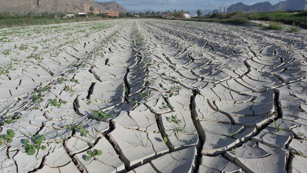 Campos de Orihuela, en Alicante, afectados por la falta de precipitaciones.