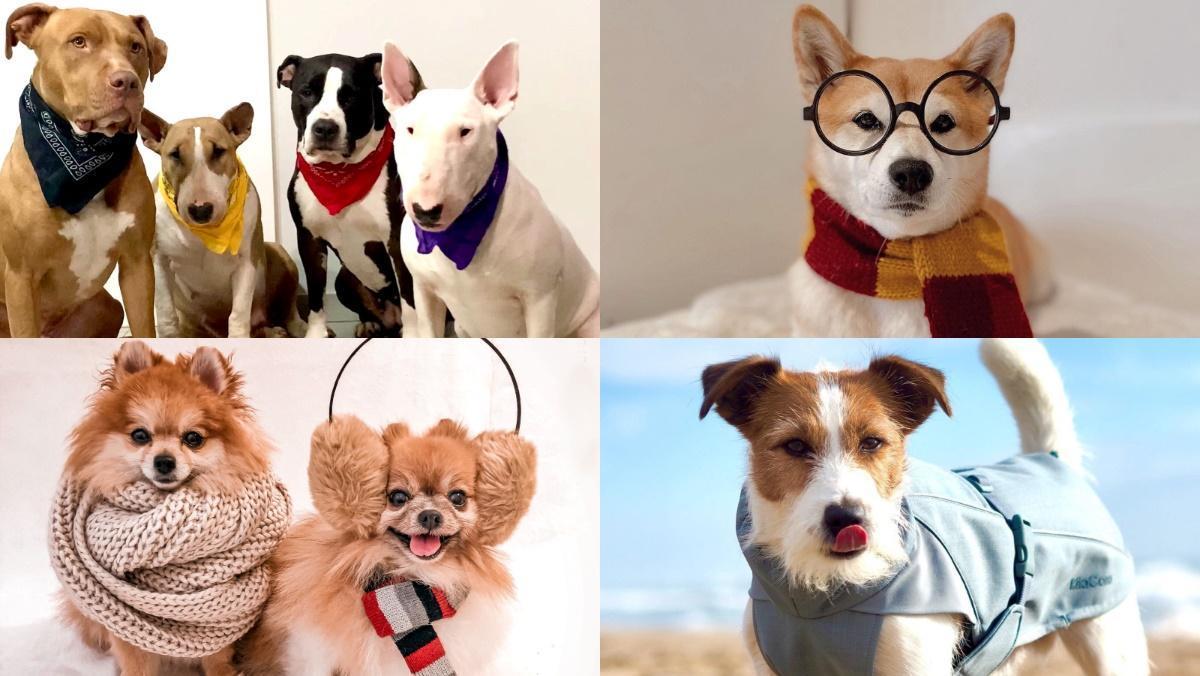 Els gossos 'influencers' de Barcelona