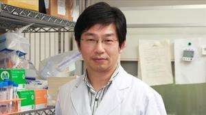 Micos amb Parkinson milloren els seus moviments gràcies a un trasplantament de cèl·lules mare humanes