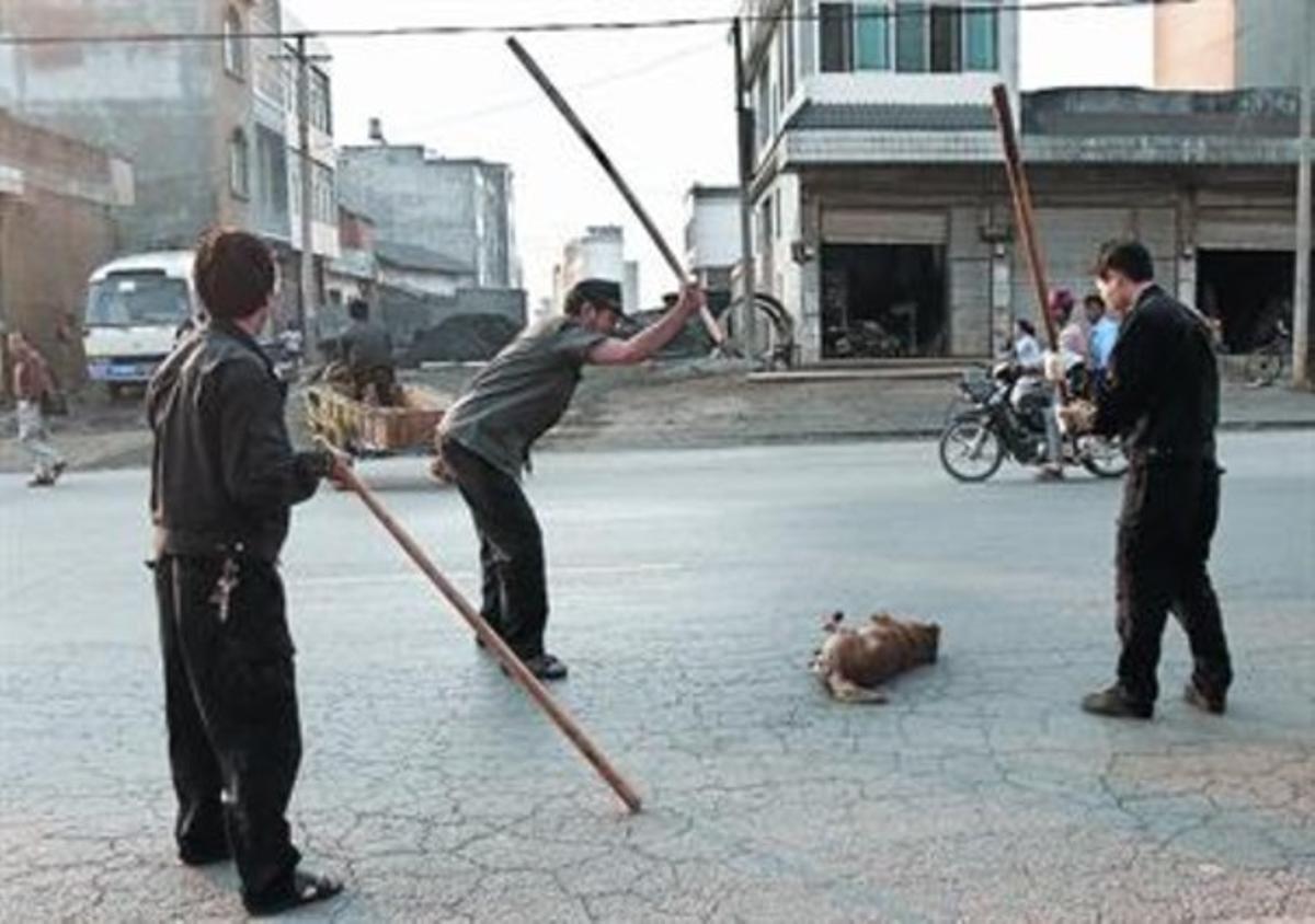 Tres hombres matan a un perro a palos en una calle de Yunnan, en abril del 2006.