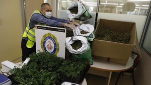 Marihuana intervenida en la operación y guardada en una comisaría de la Guardia Urbana de Barcelona
