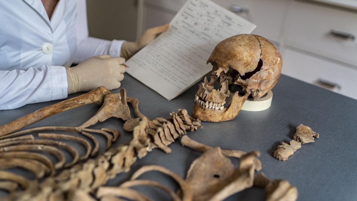 El esqueleto de una joven de la época medieval, en el laboratorio de Paleopatología del MAC, este miércoles.