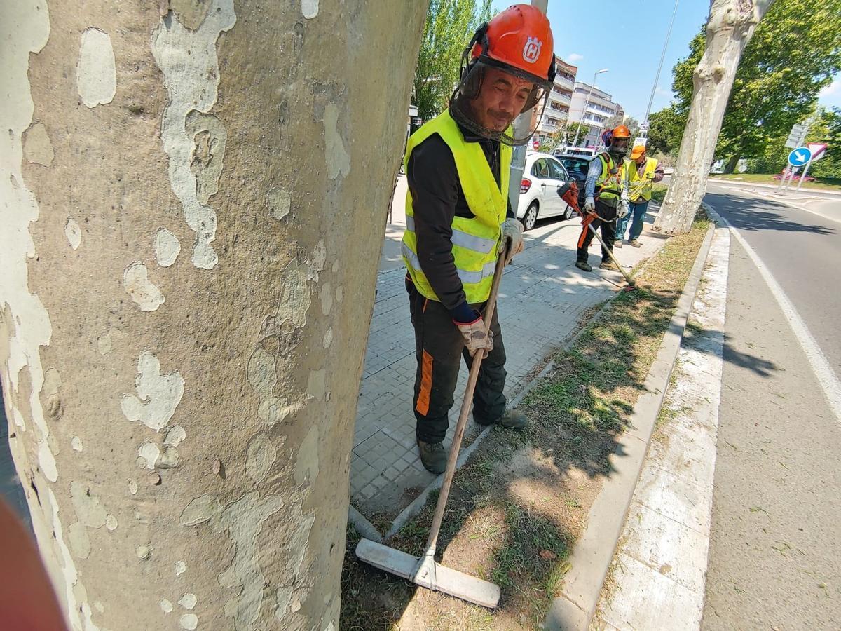 Mantenimiento y control de la proliferación de hierbas en el entorno urbano de Sant Boi