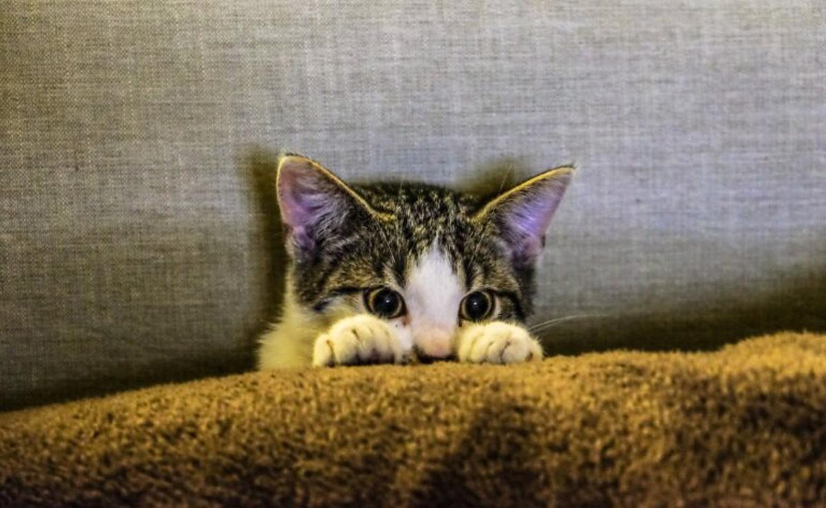 Coronavirus y mascotas: es mejor no dormir con el gato ni dejar que te lama el perro