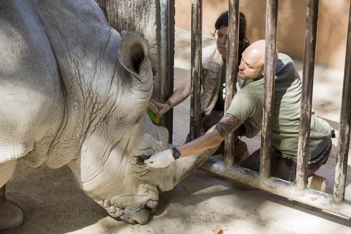 Jaula de rinoceronte en el Zoo de Barcelona.