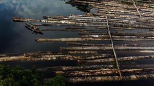 Árbiolos talados ilegalmente en el estado amazónicode Manacupuru, en Brasil, este mes de julio.