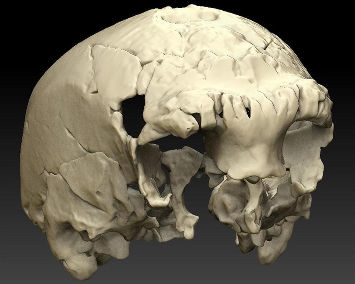 Reconstrucción virtual del cráneo Aroeira 3, localizado en el yacimiento portugués del mismo nombre. Tiene unos 400.000 años.
