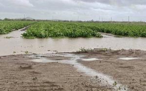 Inundaciones en sembradíos de Cuba.