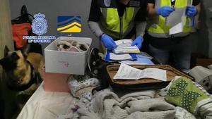 Detenidas 30 personas que, presuntamente, conformaban una red ilegal a nivel internacional dedicada a amañar parejas de hecho en Sagunto (Valencia) para regularizar a inmigrantes de origen magrebí.