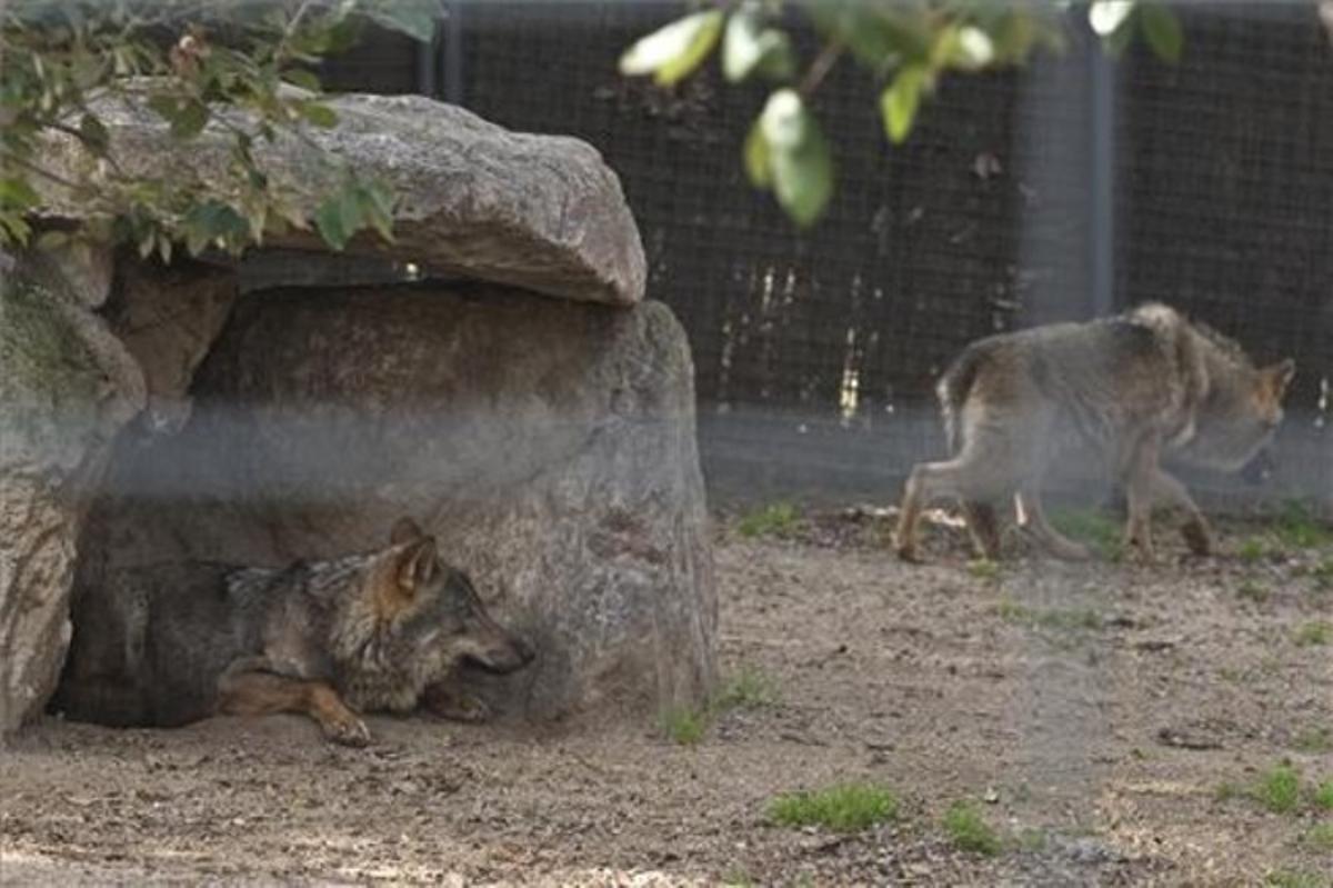 Dues de les filles de Penélope, dimecres, a la zona reservada a les llobes que ahir va quedar buida.