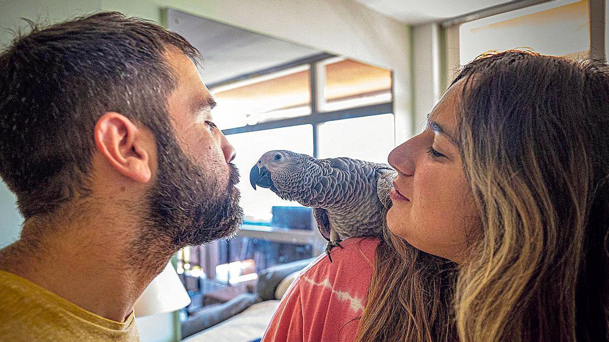 Al rescate de fauna urbana en apuros en Barcelona