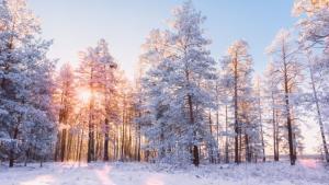 Paisaje de invierno deun bosque nevado.