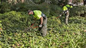 Unos jardineros arreglan los arbustos de los jardines de la Sagrada Família.