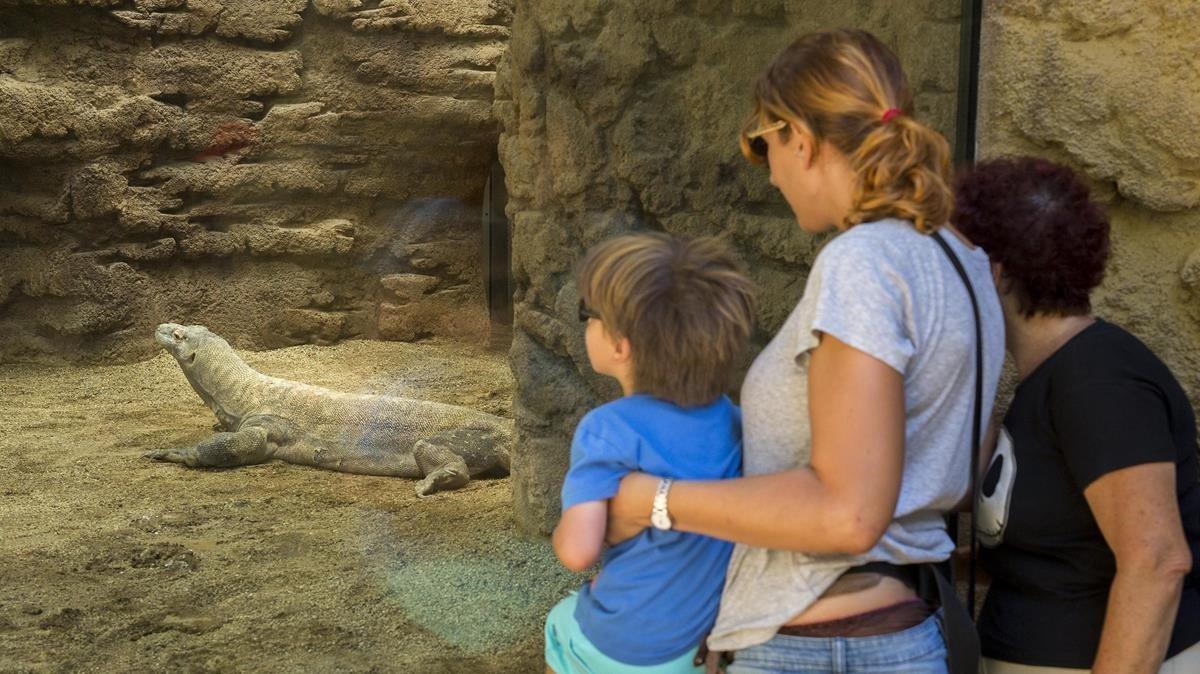 Unos visitantes del Zoo de Barcelona, en la instalación de los dragones de Komodo