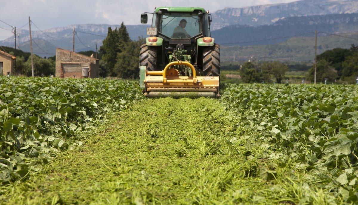 Trituración de cultivos de judía verde en Montroig del Camp que destruyen, por falta de demanda europea.
