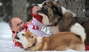 Vladímir Putin, jugando con perros.