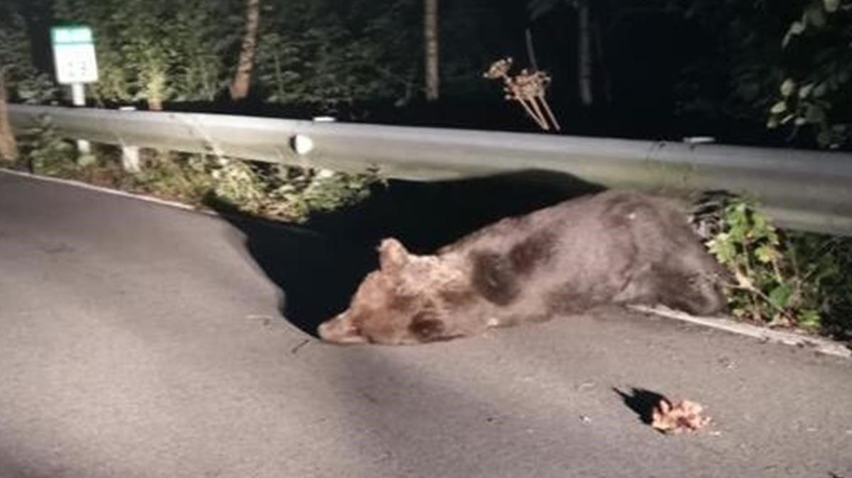 Santiaguín resultóherido tras ser atropellado en una carretera de Asturias.