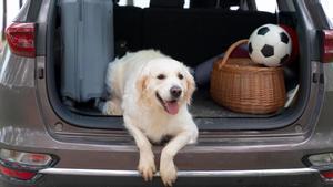 Un perro en el maletero de un coche.