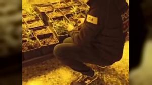 Desarticulada una organización dedicada al tráfico de marihuana con centro de operaciones en Sant Andreu de la Barca.