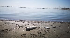 Peces muertos en una de las playas del Mar Menor, en Murcia, el pasado octubre,tras laDANA deotoño.