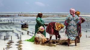 Un grupo de mujeres recoge algas en la orilla del océano Índico, en Zanzibar, uno de los ecosistemas más amenazados por la crisis climática