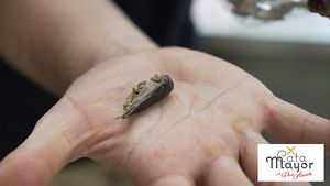 Cata mayor: cata de insectos en la Boqueria con Xavi Petràs
