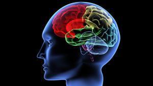 Visión interna de un cerebro humano.