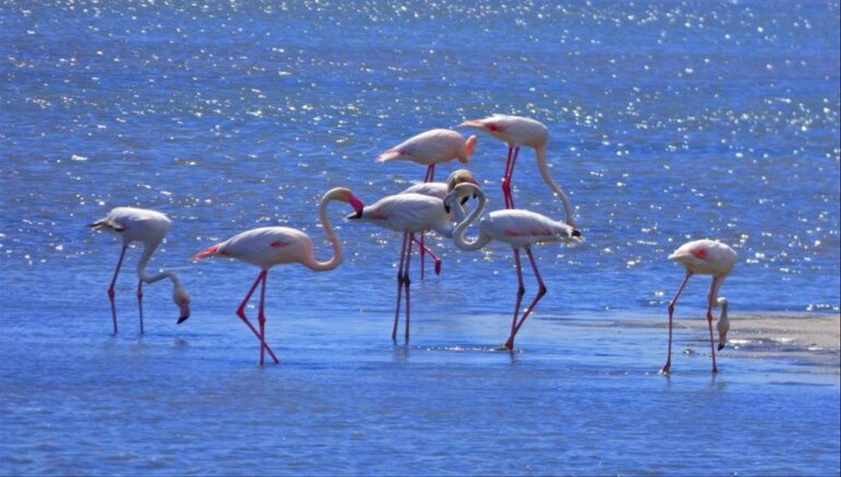Doñana, Garajonay e Ibiza, patrimonio de la Unesco en peligro