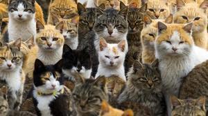 Gatos en Japón.