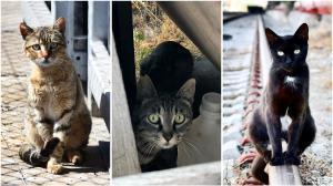 Combo de tres gatos en Barcelona.