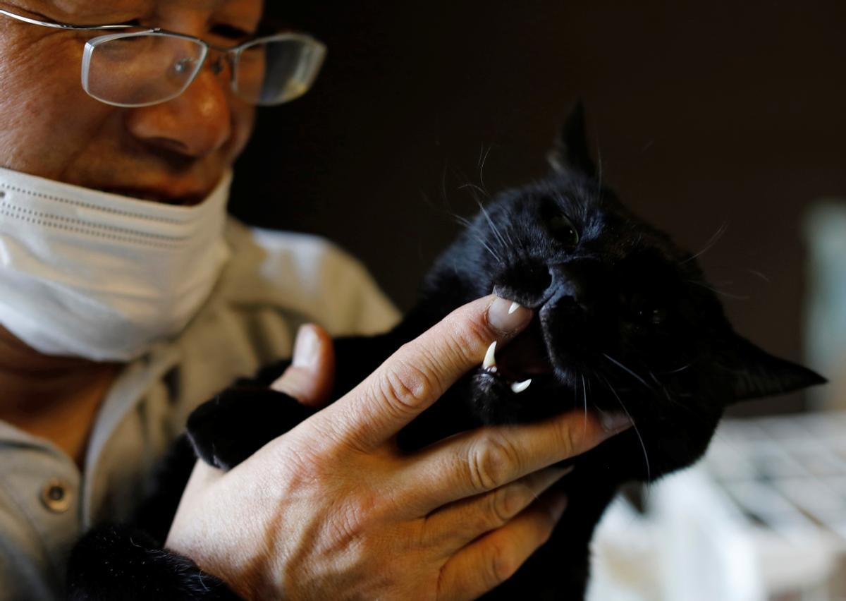 Sakae Kato acaricia a un gato rescatado en su casa, en Fukushima
