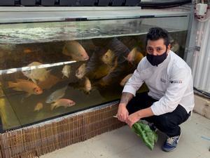 Diego Gallegos, chef del restaurante Sollo, junto a los peces de río salvajes que cultiva a través de la técnica de la acuaponía.