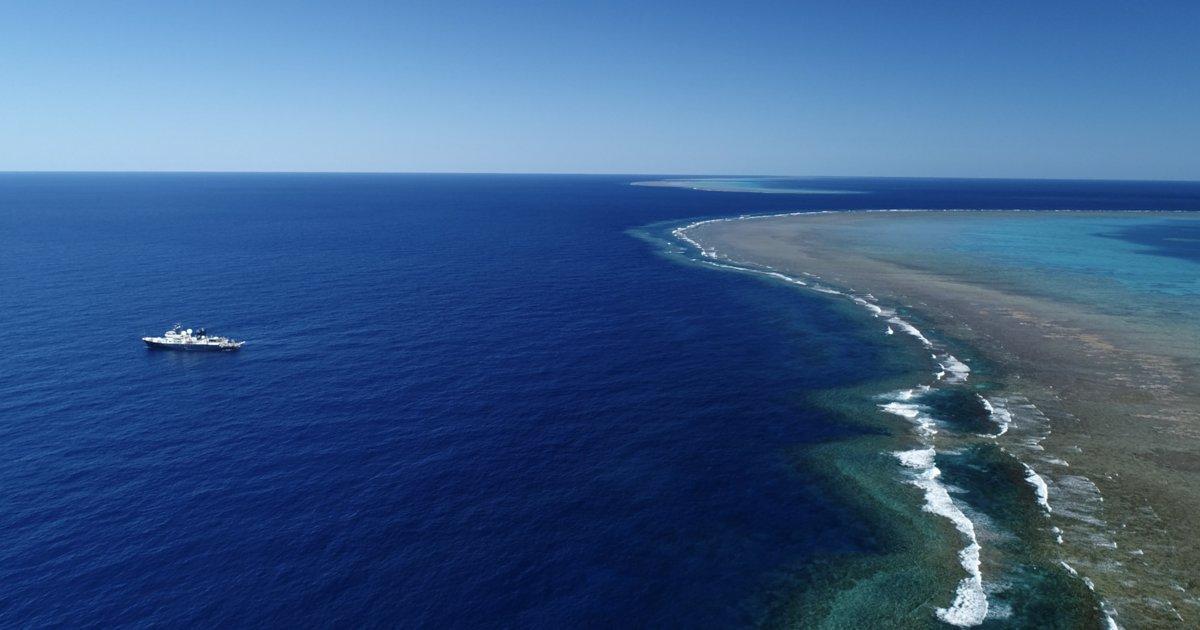 Descobert un corall més alt que l'Empire State a la Gran Barrera d'Austràlia