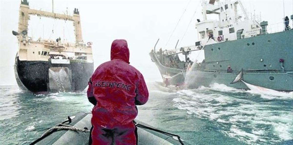 bloqueo en alta mar. Una balsa del buque 'Esperanza' de Greenpeace intenta evitar la transferencia de una ballena capturada del pesquero japonés a su nave nodriza, en el Antártico, en diciembre del 2005.