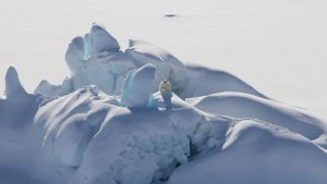 L'últim refugi del gel àrtic és més vulnerable del que crèiem