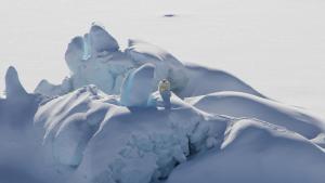 Un oso polar se posa sobre una placa de hielo ártico situada al norte de Groenlandia.