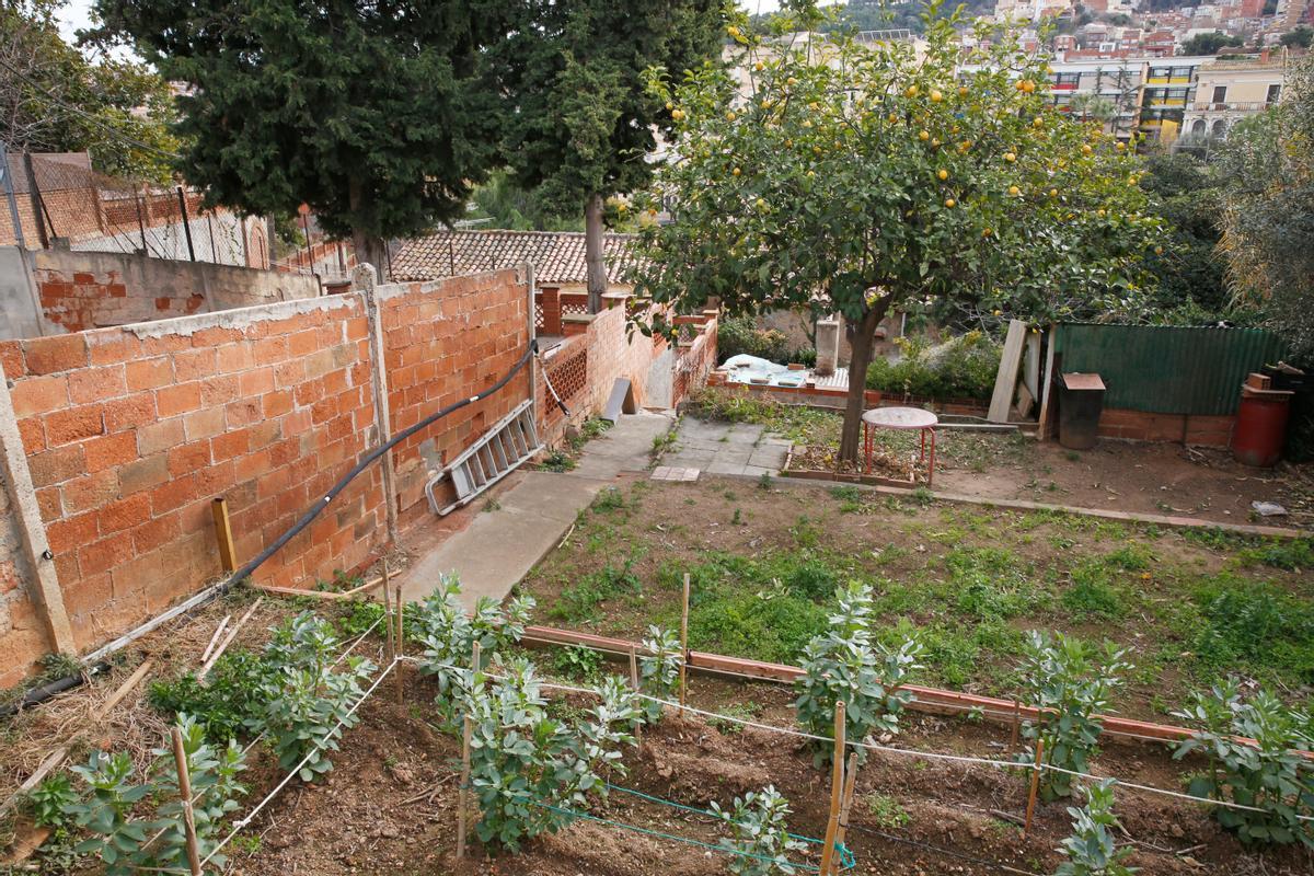 Huertos afectados por la actuación urbanística en la Baixada de Can Mateu, en Horta.
