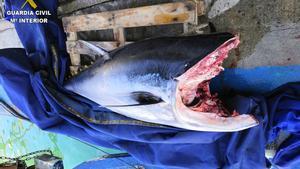 15/05/2020 Intervenido un atún rojo en Arenys