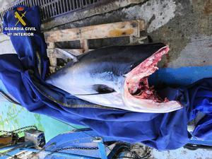 El atún rojo de 82,4 kilos intervenido por la Guardia Civil en el puerto de Arenys de Mar.