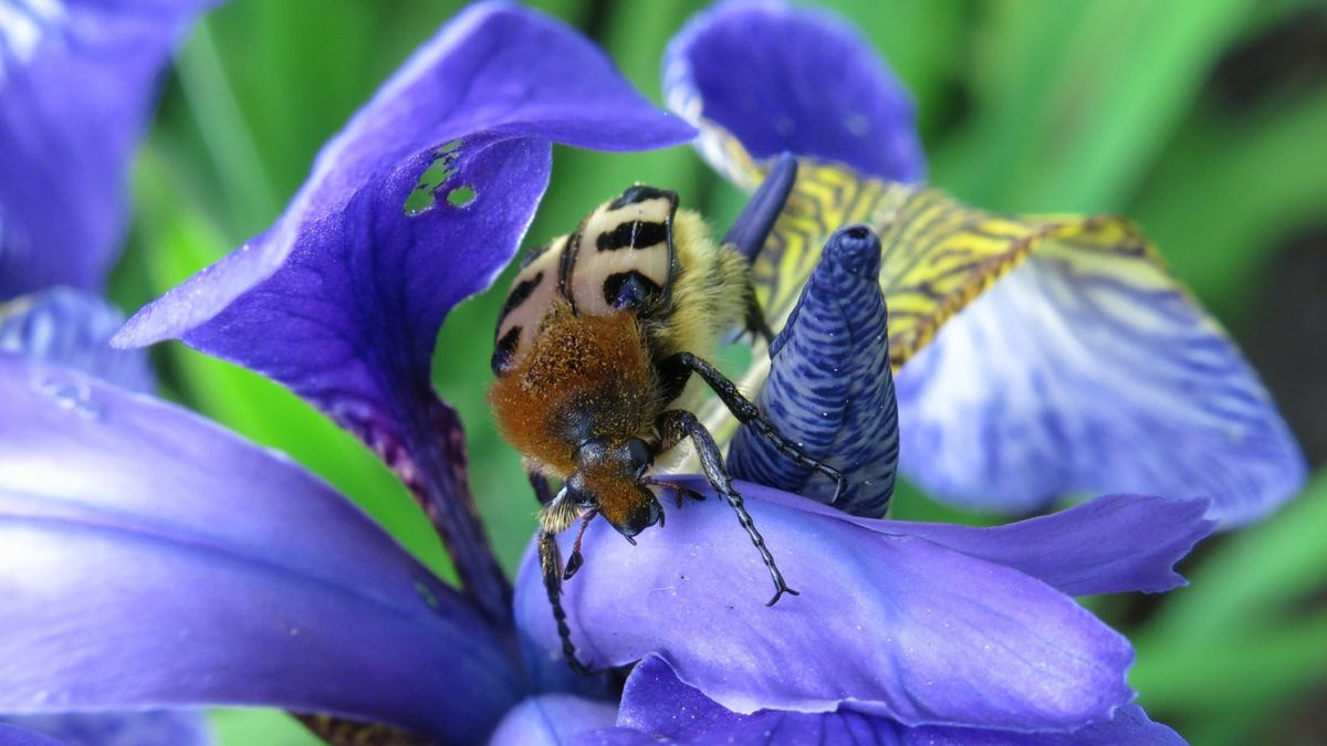 Cinco alimentos que actúan como insecticida natural para plantas