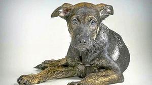 A judici els amos d'un gos per la seva mort violenta