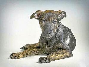 La perra Cooper, en una foto de archivo de la protectora Defaniva