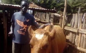 La vaca 'Barcelona' ja fa llet