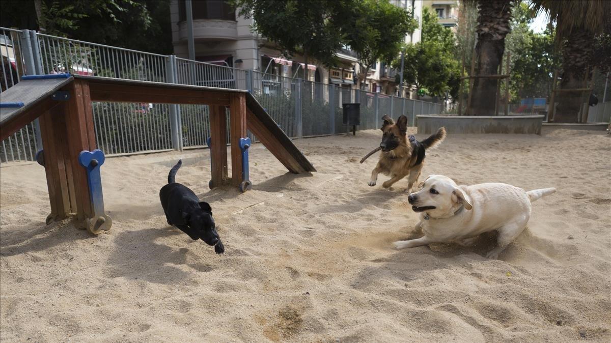 El 62,3% de gossos que viuen a Terrassa no estan censats