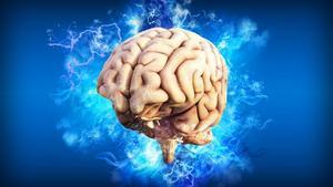 Tener educación superior no ralentiza el envejecimiento cerebral