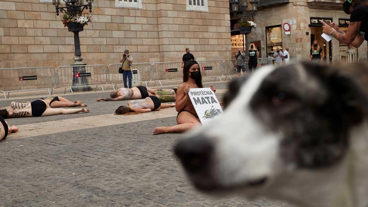 Animalistas piden a Barcelona fuegos artificiales sin sonido.