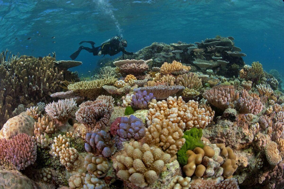 Alianza mundial: 196 países se unen para proteger la naturaleza