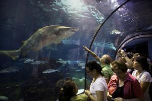 L'Aquàrium compleix 25 anys