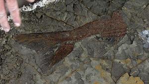 Uno de los fósiles hallados en Dakota del Norte.